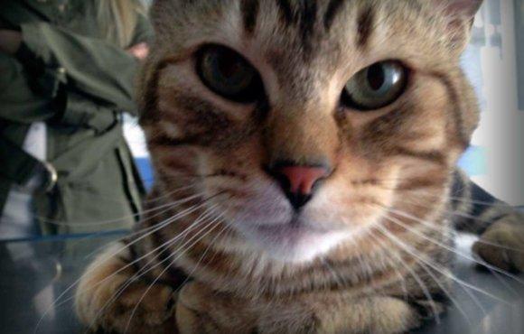 Atención Médica para perros y gatos