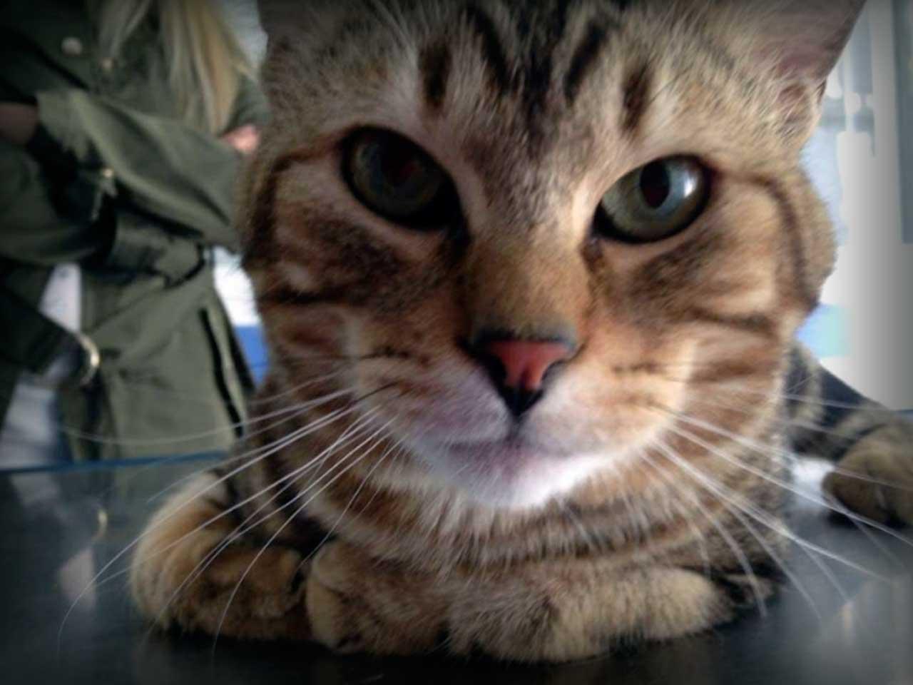 atencón médica para perros y gatos aplivet