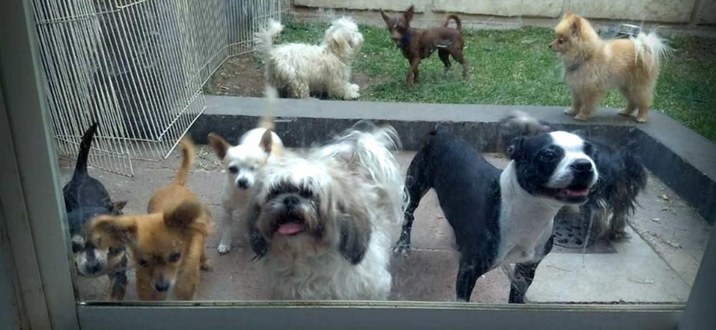 Pensión para perros Aplivet