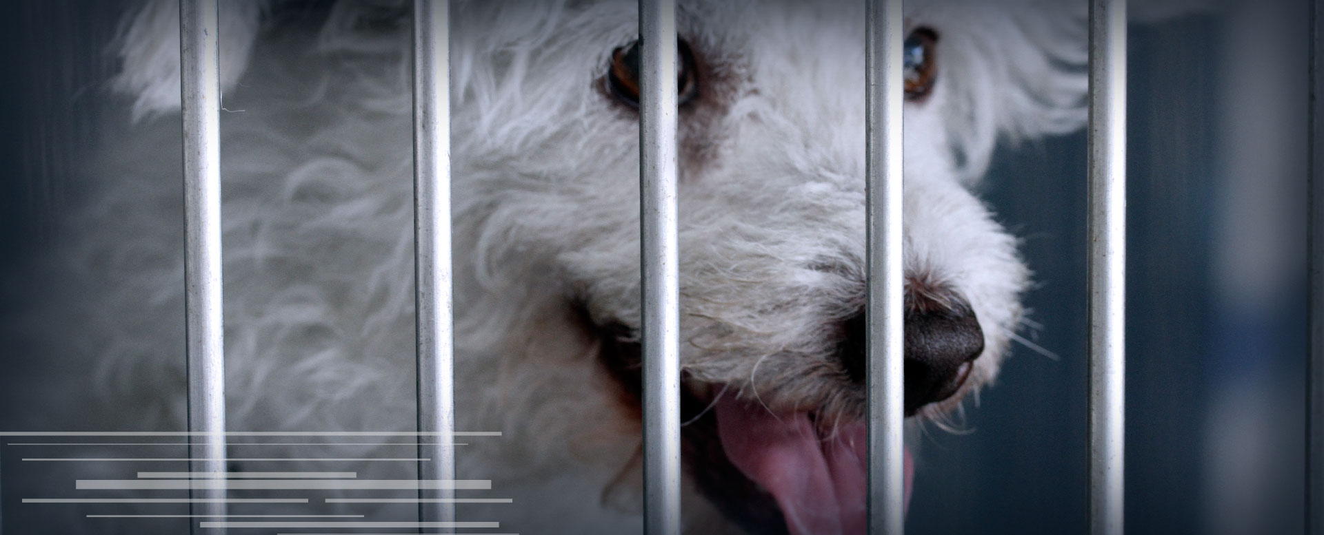 Medicina preventiva veterinaria | Centro Médico Veterinario Alivet 24 horas