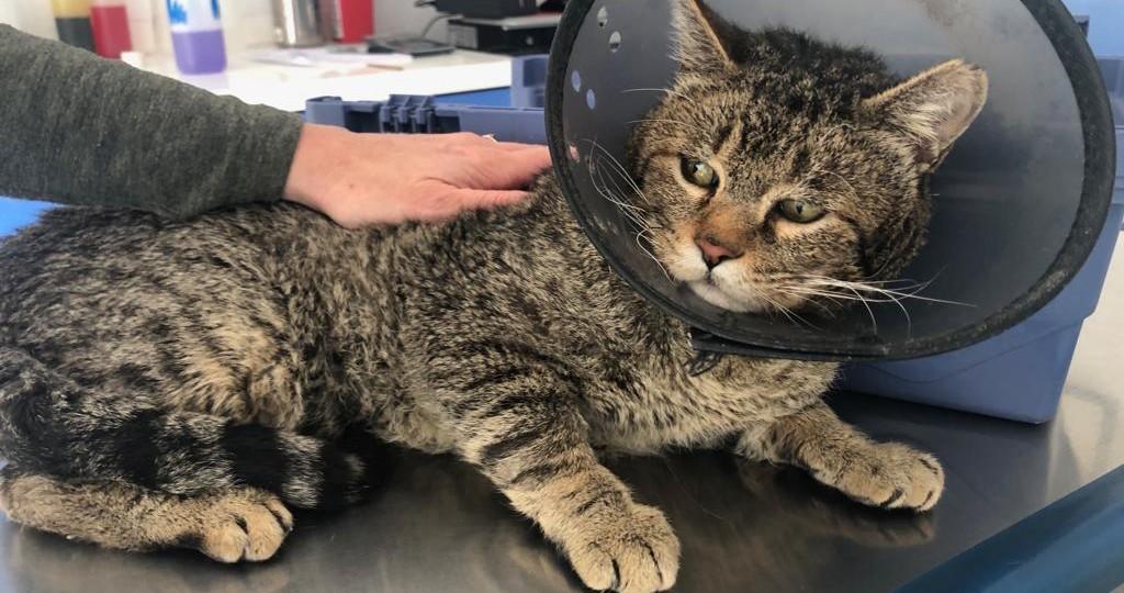 Centro Veterinario Aplivet-Felix un gato feliz